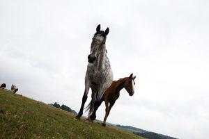 Ecurie des Sauvlons - Photos